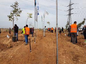 נוטעים עצים למען האחדות